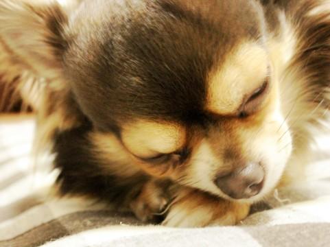 アイスノンを犬用に?成分のエチレングリコールが危ない