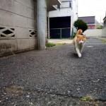 車ボンネットの猫よけ 方法と対策には超音波